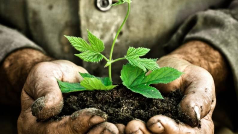 Día Mundial del Medio Ambiente | Reportaje
