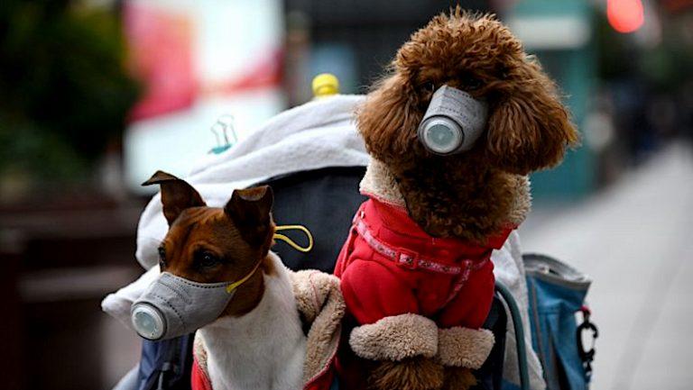Medidas del Coronavirus para Mascotas | Estado de Alarma