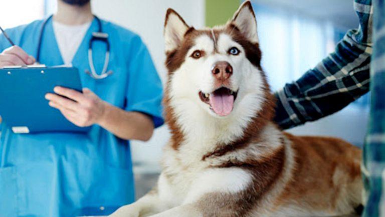 Entrevista Covid-19 | Centro de Urgencias Veterinarias