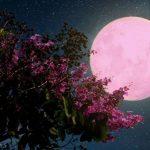 Vigoplan   Luna Rosa De Junio