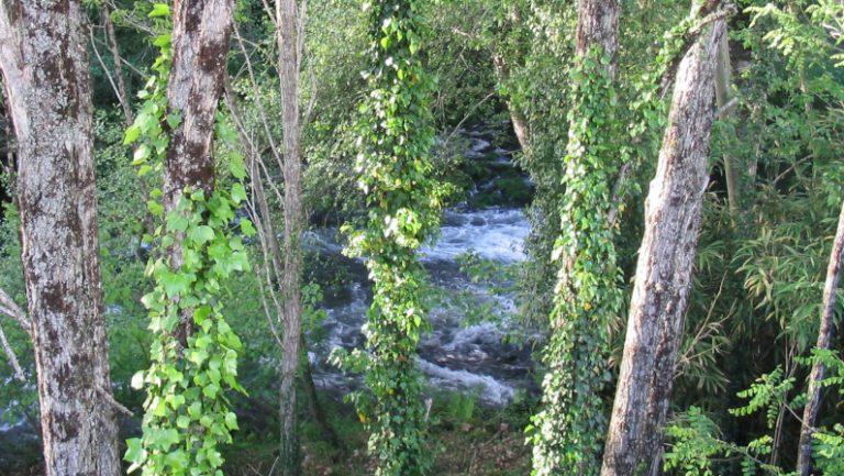 Lee más sobre el artículo Balneario de Sabaxáns, Casa de baños de Ermelo de Mondariz